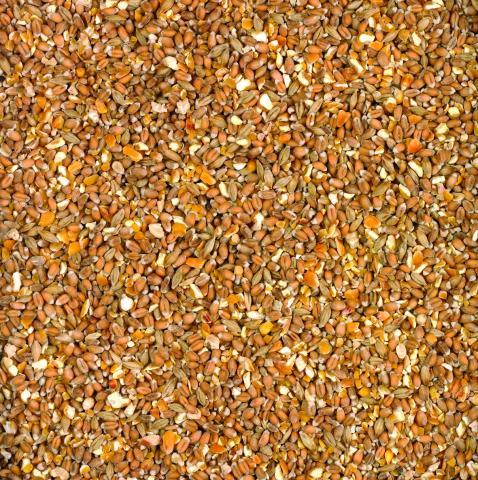 Bucktons Mixed Corn