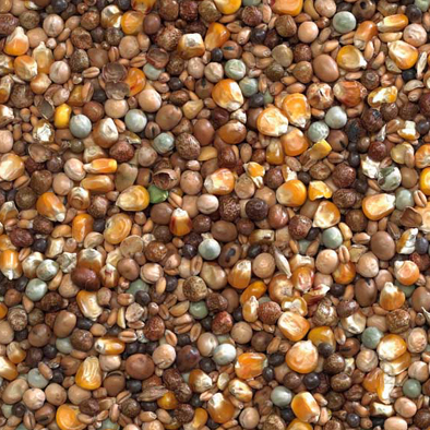 Bucktons High Protein Economy Mix