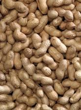 Bucktons Peanuts In Shell