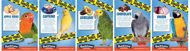 Pet Bird Danger Foods