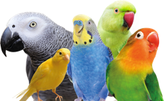 An image of general aviary birds