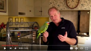 Housing and routine care for your pet bird