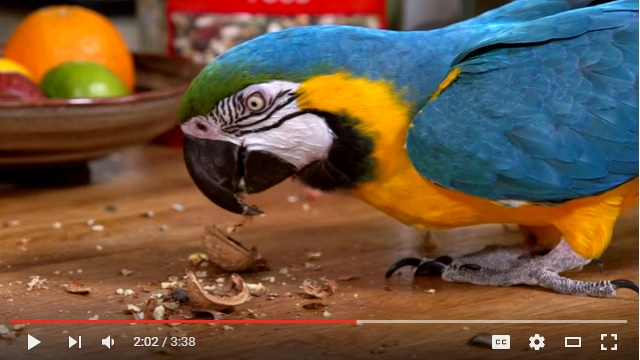 Ways to provide enrichment for your pet bird