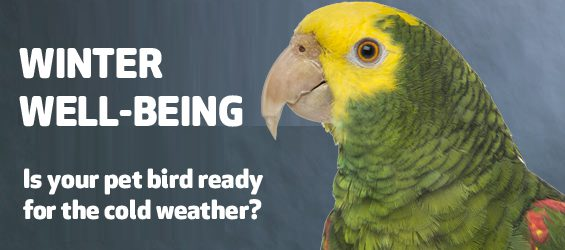 Winter Well-Being for Pet Birds
