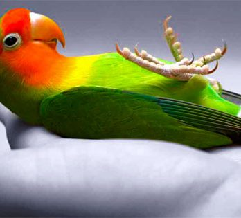 Love Your Pet Bird