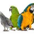Seasonal Changes in Parrots Blog