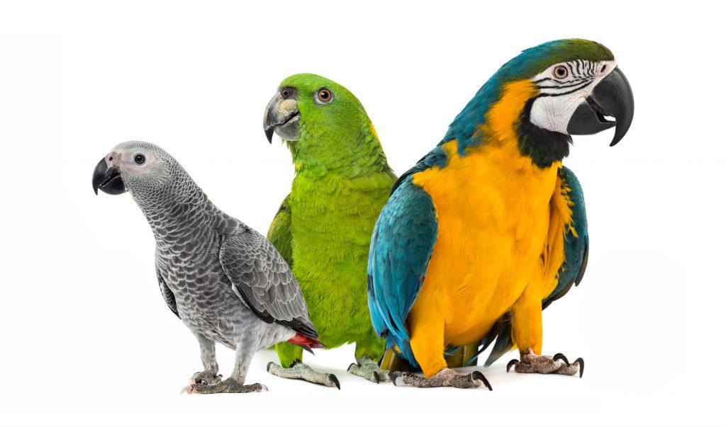 Seasonal Changes in Parrots