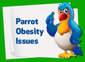 parrot obesity issues