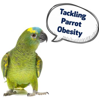 tackling parrot obesity