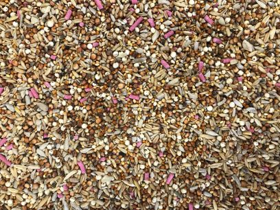 BK 12 Seed Blend